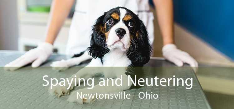 Spaying and Neutering Newtonsville - Ohio