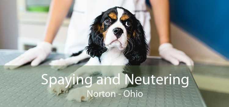 Spaying and Neutering Norton - Ohio
