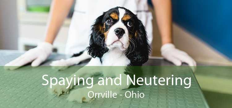 Spaying and Neutering Orrville - Ohio