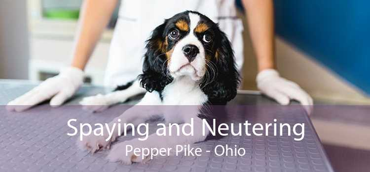 Spaying and Neutering Pepper Pike - Ohio