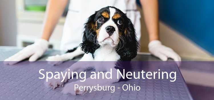 Spaying and Neutering Perrysburg - Ohio