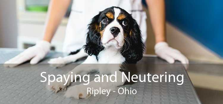 Spaying and Neutering Ripley - Ohio