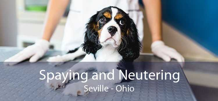 Spaying and Neutering Seville - Ohio