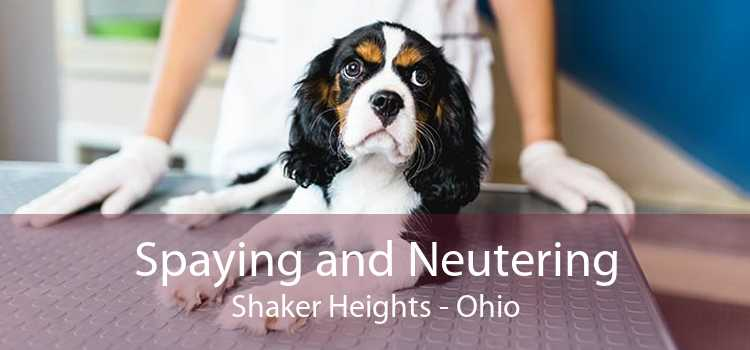 Spaying and Neutering Shaker Heights - Ohio