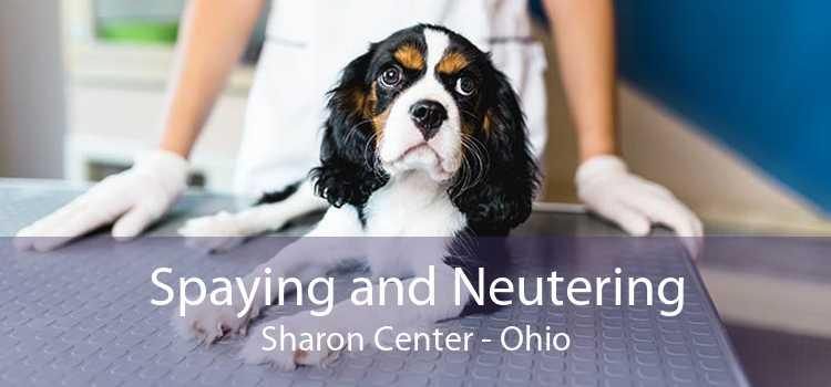 Spaying and Neutering Sharon Center - Ohio