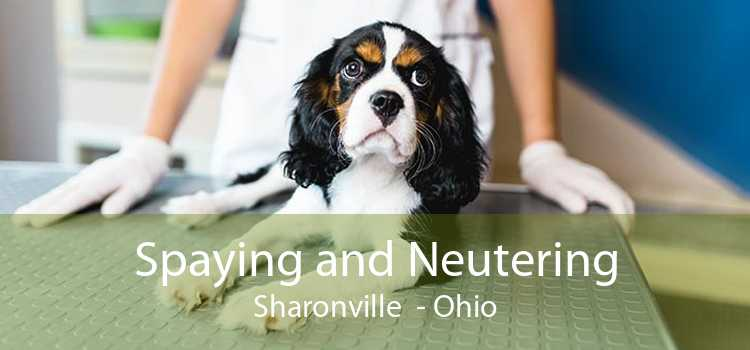 Spaying and Neutering Sharonville - Ohio