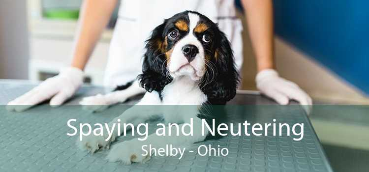 Spaying and Neutering Shelby - Ohio