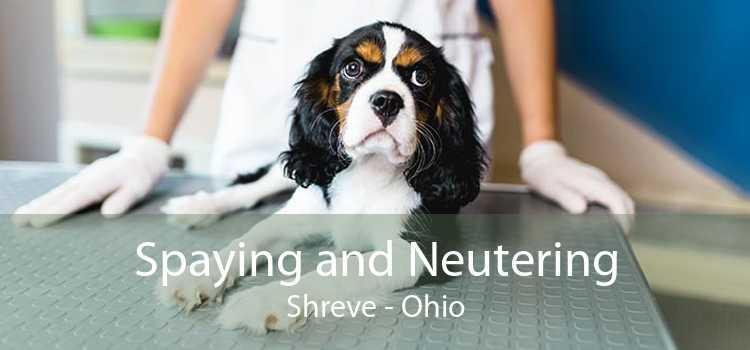 Spaying and Neutering Shreve - Ohio