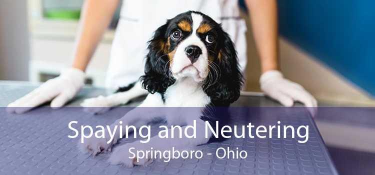 Spaying and Neutering Springboro - Ohio