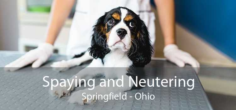 Spaying and Neutering Springfield - Ohio