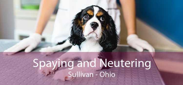 Spaying and Neutering Sullivan - Ohio