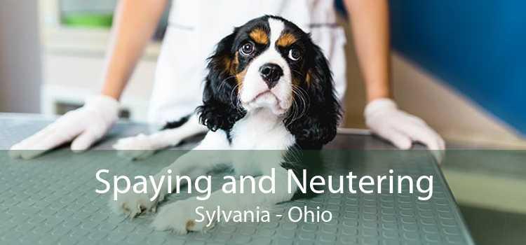Spaying and Neutering Sylvania - Ohio