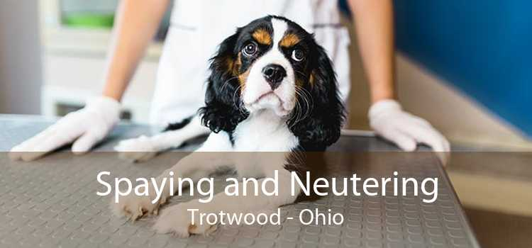 Spaying and Neutering Trotwood - Ohio