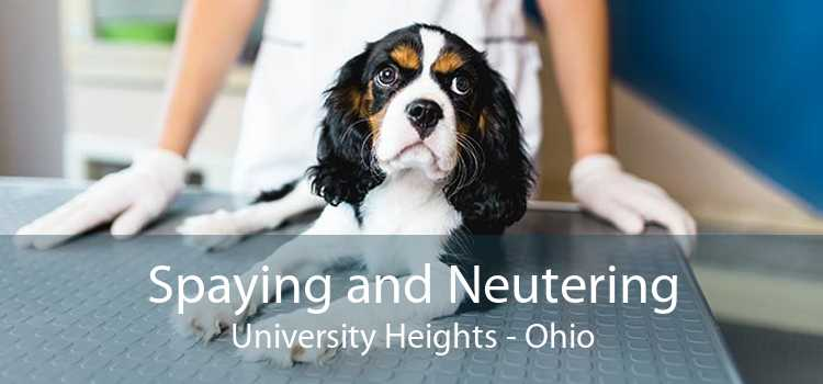 Spaying and Neutering University Heights - Ohio