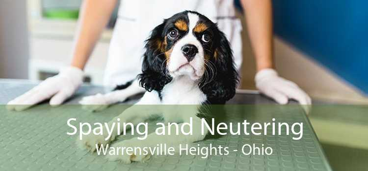 Spaying and Neutering Warrensville Heights - Ohio
