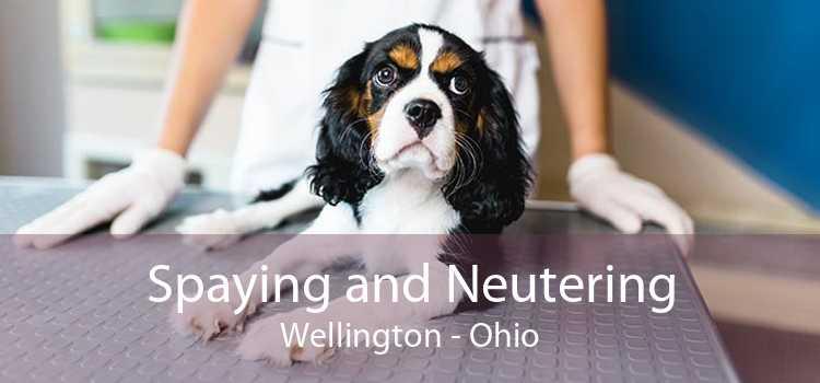 Spaying and Neutering Wellington - Ohio