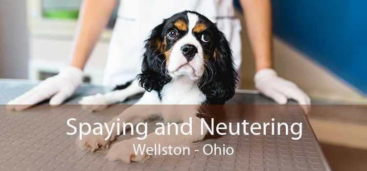 Spaying and Neutering Wellston - Ohio