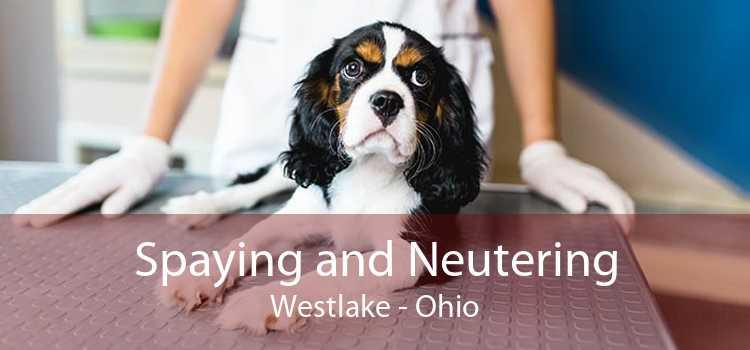 Spaying and Neutering Westlake - Ohio