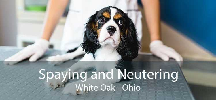 Spaying and Neutering White Oak - Ohio