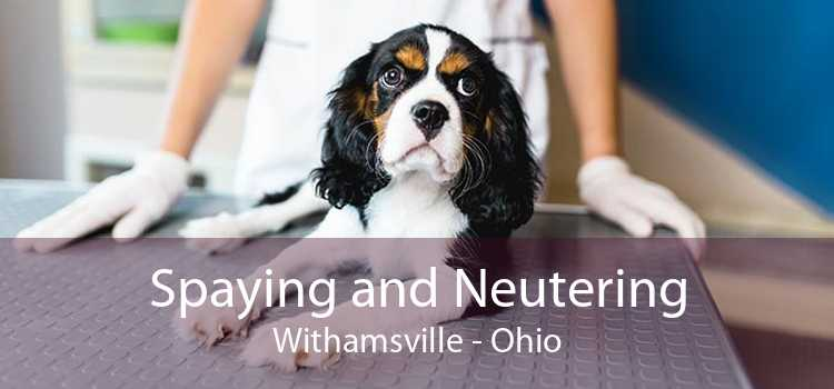 Spaying and Neutering Withamsville - Ohio