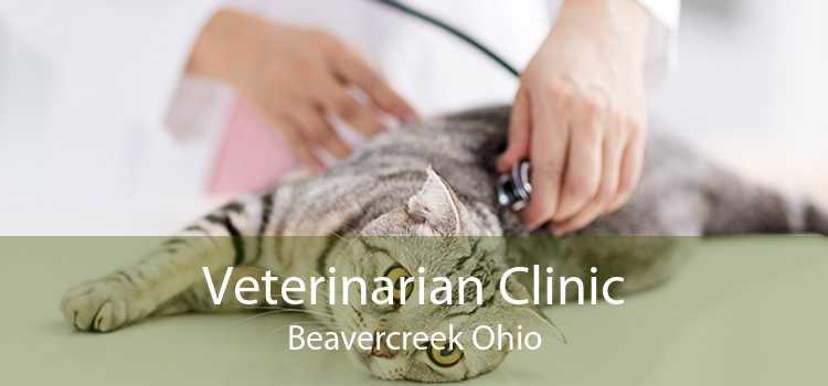 Veterinarian Clinic Beavercreek Ohio