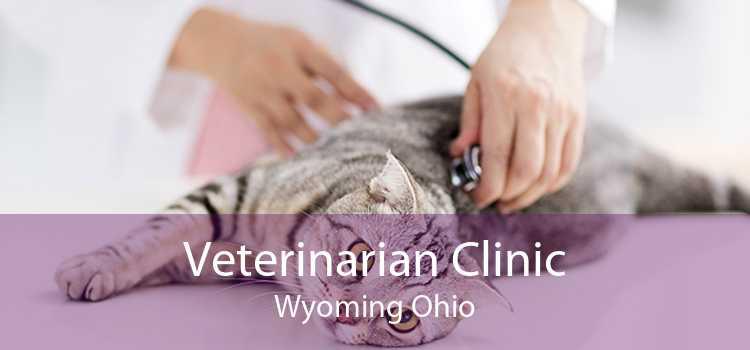 Veterinarian Clinic Wyoming Ohio